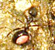 marking ants, ameisen markieren