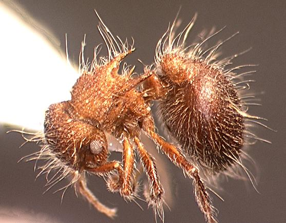 ant under a microscope - photo #7